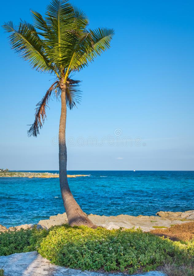 Lone palm tree. Beautiful tropical landscape, blue sky and sea in the background. Vertical layout. royalty free stock photos