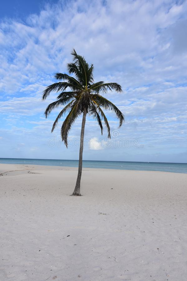 Vacation spot on eagle beach with beautiful views. Lone palm tree on eagle beach with beautiful views royalty free stock images