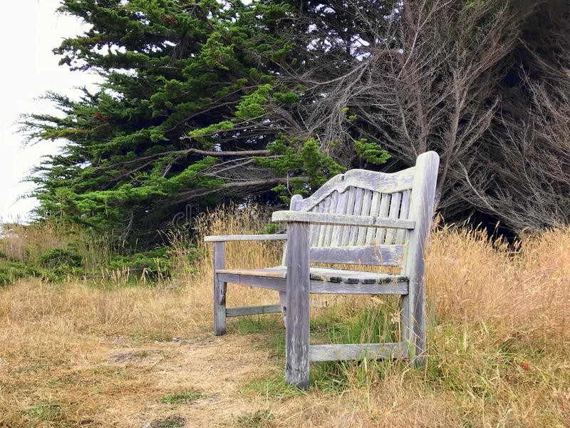 Lone park bench stock photography