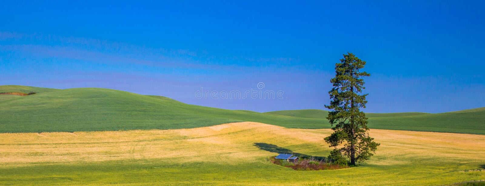 Lone Pine Tree stock photography
