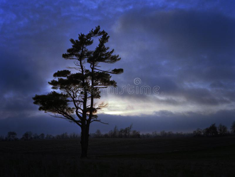 Lone Pine Tree at Sunset stock image