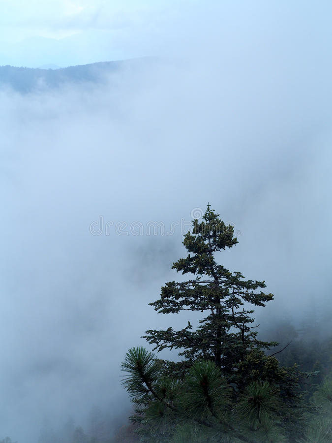 A lone pine trees stands above fast moving fog that is rising up the steep ridge of the Mogollon Rim. On a rainy afternoon. The Mogollon Rim is a rugged stock photos