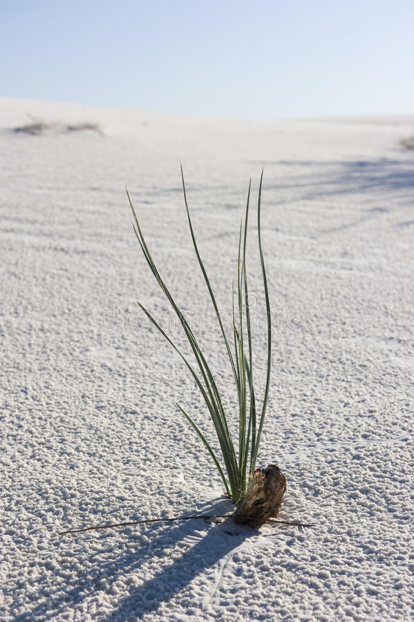 Download A lone plant in the desert stock image. Image of tularosa - 15850017