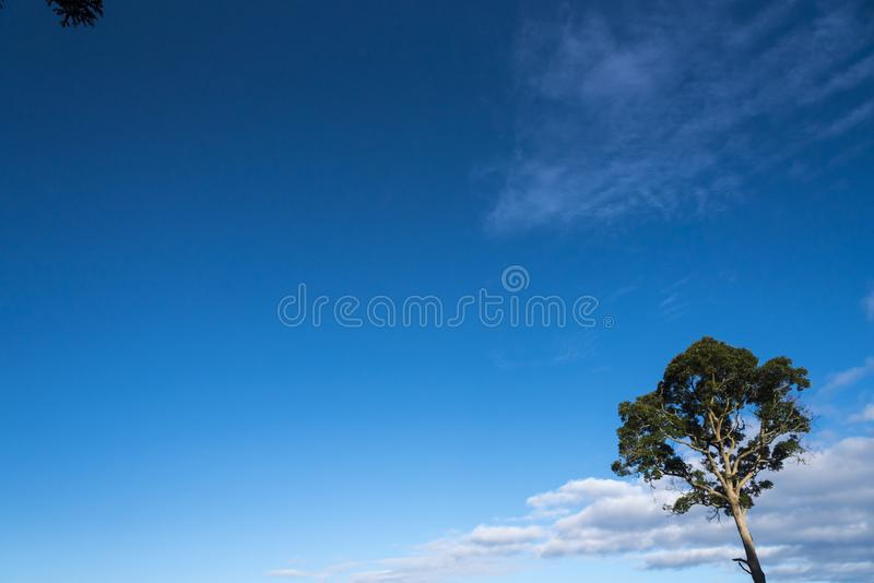 Lone proud tree. Lone tree stands proud against the blue sky background stock photos
