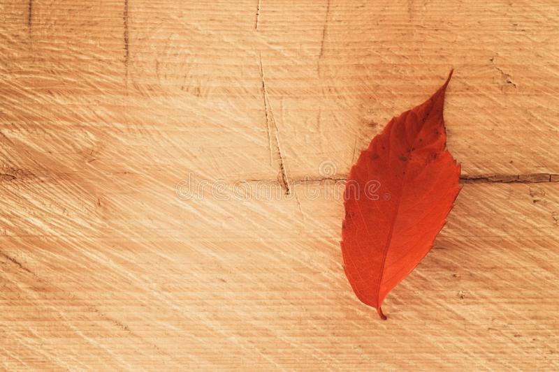 Lone red leaf on wooden background, autumn paint texture stock photos