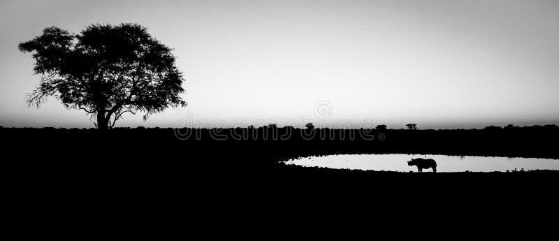 Lone Rhino at sunset. One lonely rhino with tree stock photo