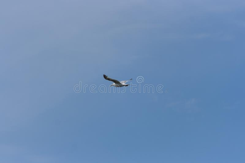 Lone Seagull on Clear Blue Sky stock image
