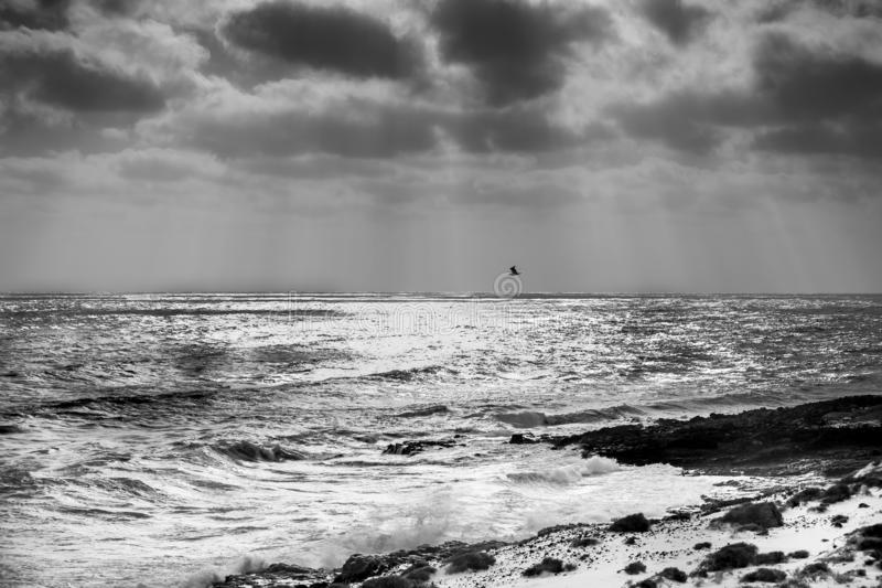 A lone seagull flies over the sea against a dramatic sky with rays of sunlight filtering through the black clouds. In black and white royalty free stock photo
