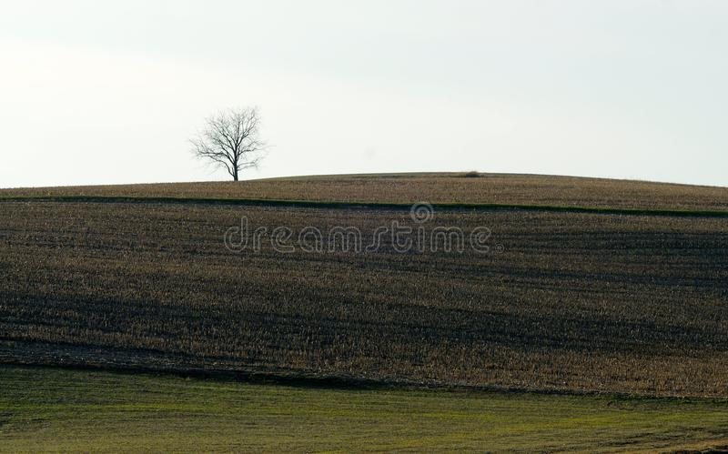 Lone solitary tree in field on horizon royalty free stock image