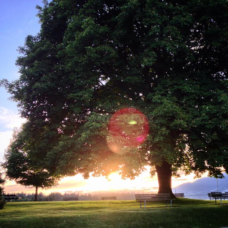 lone solnedgångtree royaltyfria bilder