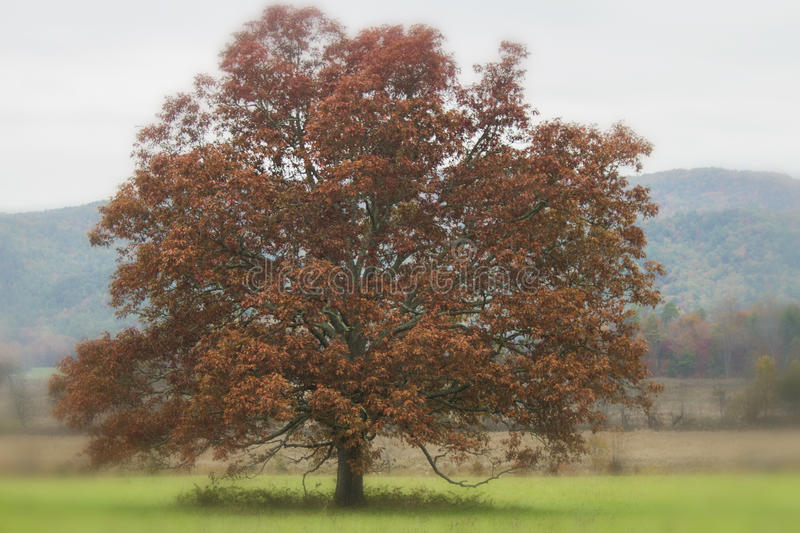 Lone Surreal Red Tree. Surreal, single red tree in a meadow in autumn royalty free stock image