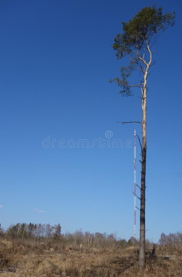 Lone tall pine tree against the Olsztyn Radio Mast in the background stock images