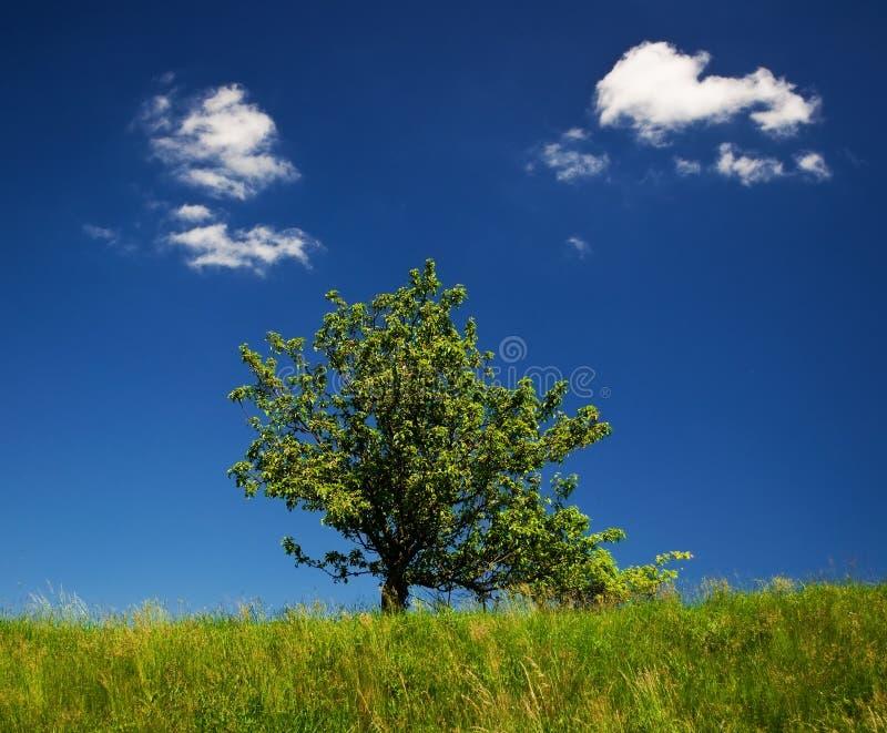 Lone tree. In the field near Brno, Czech republic royalty free stock photography