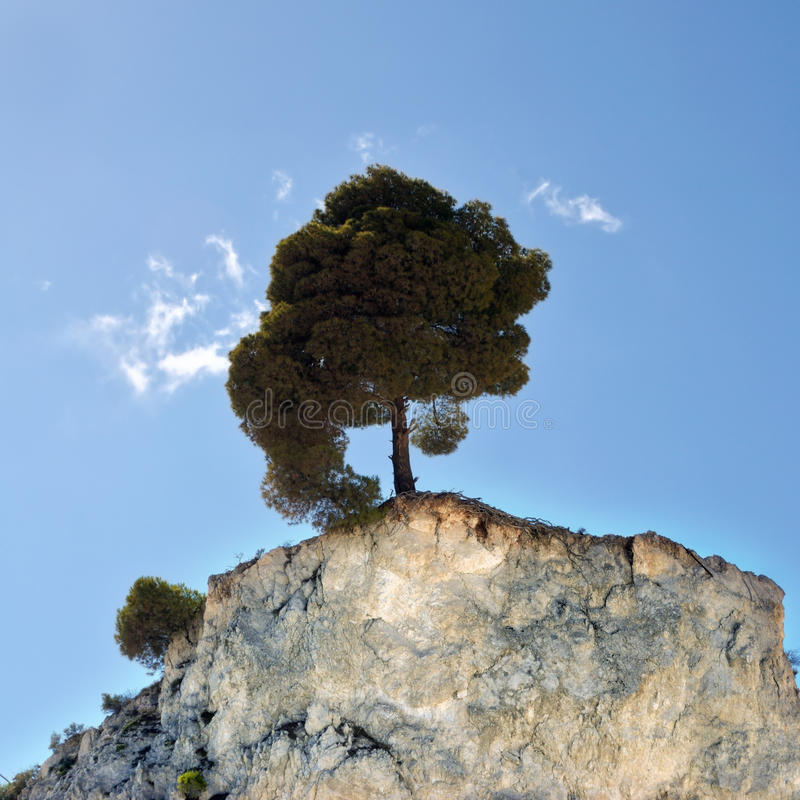 Lone tree. Lone pine tree on the edge of a hilltop cliff stock photography