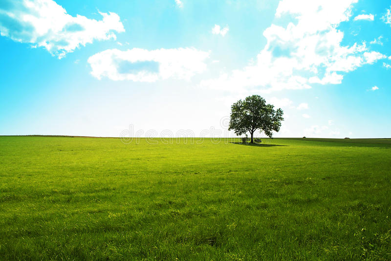 Lone tree. With art effect and copyspace stock image