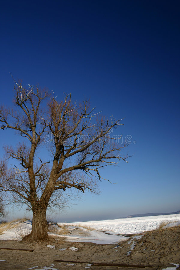 Download Lone Tree stock photo. Image of great, freezing, horizon - 2326108