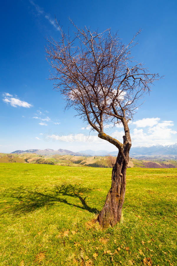 Download Lone Tree Royalty Free Stock Photos - Image: 24874838