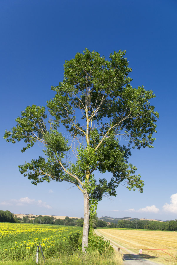 Free Lone Tree Stock Image - 2787021