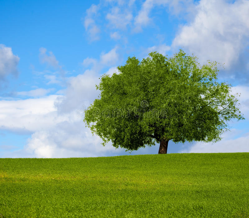 Download Lone tree stock photo. Image of leaf, country, garden - 28765054