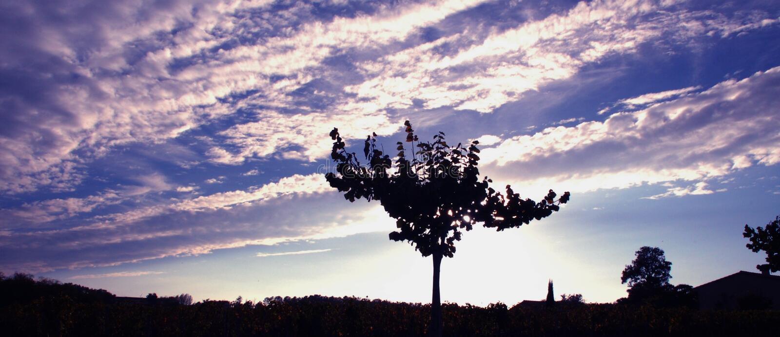 Download Lone tree stock image. Image of lone, sunset, sauterne - 468099