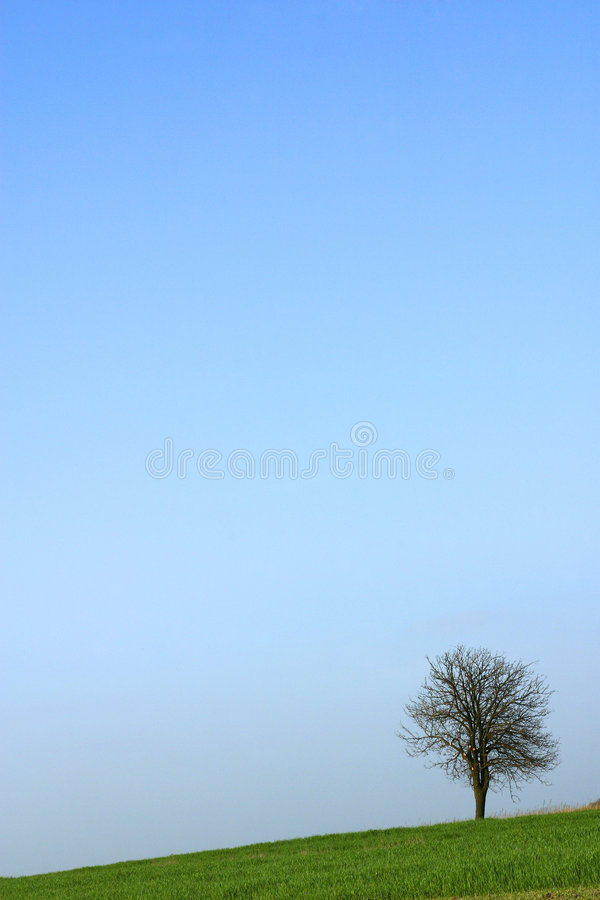 Download Lone Tree Stock Image - Image: 506181