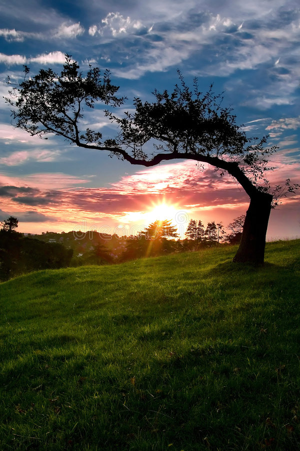 Download Lone Tree stock image. Image of sunset, field, clouds - 5977221