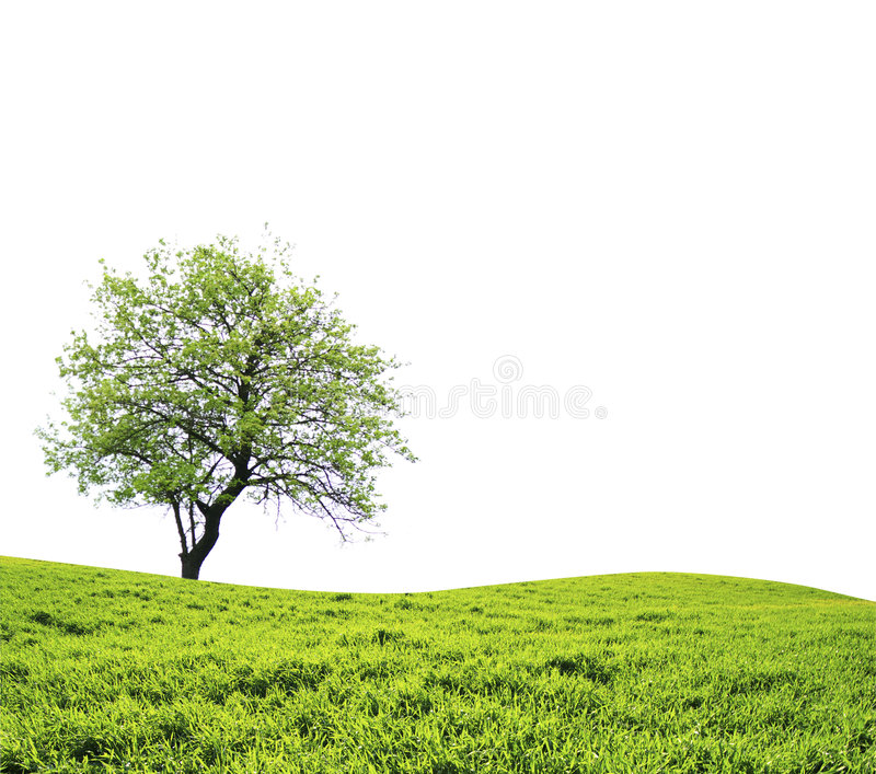 Download Lone tree stock photo. Image of natural, nature, forest - 8420686