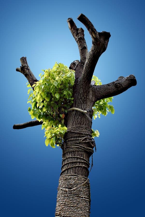 Free Lone Tree Stock Image - 9198531