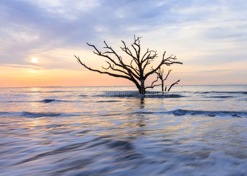 Lone Tree Atlantic Ocean Coast SC South Carolina. A lone tree in the Atlantic Ocean waves at sunrise on Edisto Island near Charleston, South Carolina royalty free stock photo