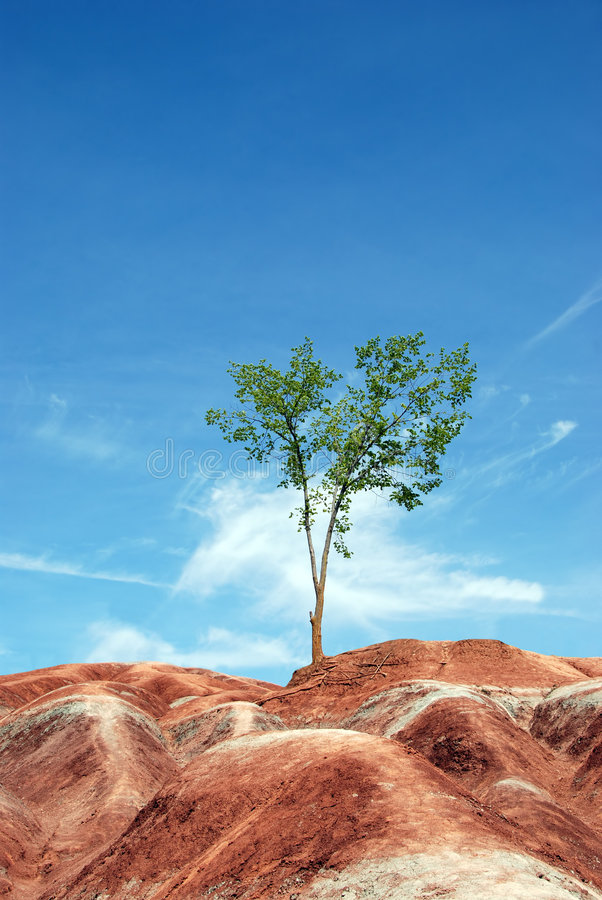 Lone tree in badlands. Ontario canada stock photo