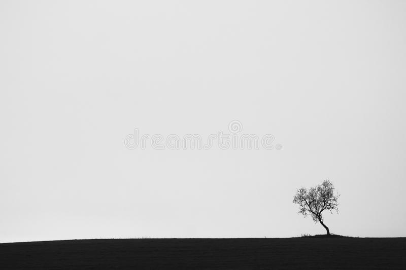 Lone tree. In black and white stock images