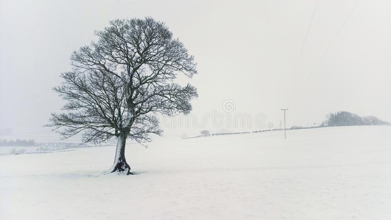 Lone tree in Blizzard. A lone tree in a Northumberland field during a blizzard stock image