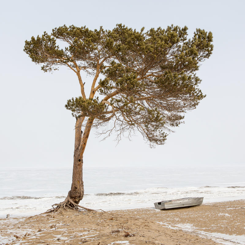 Lone tree and boat on the shore of frozen Lake Baikal, Russia.  royalty free stock photography