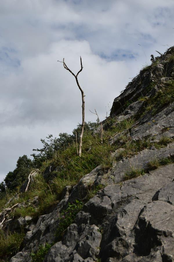 Lone tree, Burrington Combe, Mendip hills. A single lone tree growing from the rocks, Burrington Combe royalty free stock photo
