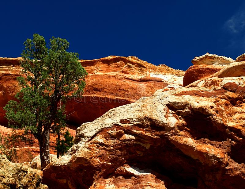 Download Lone Tree on the Cliff stock photo. Image of southwest - 20832730