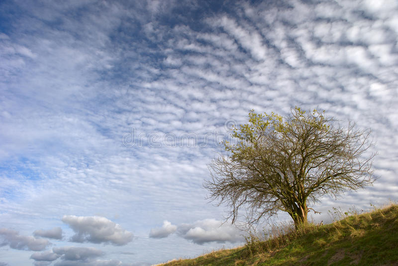 Lone tree and clouds royalty free stock photography