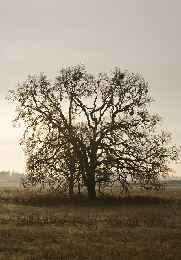 Lone Tree In Countryside Stock Image
