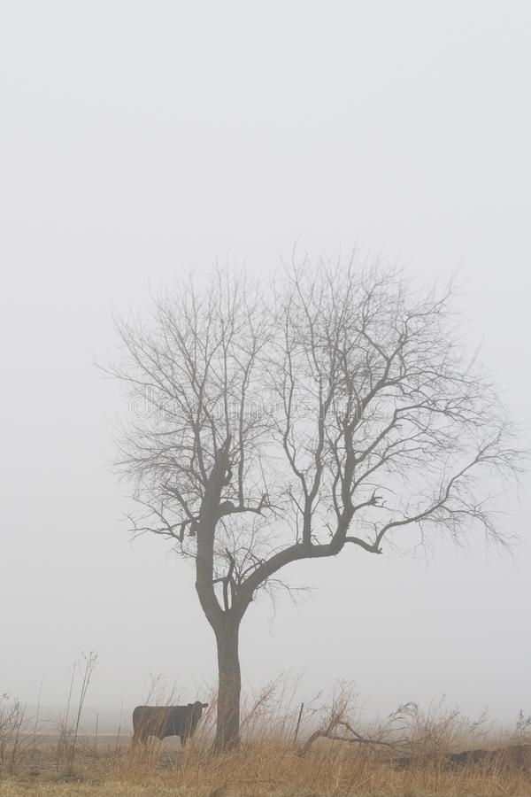 Lone tree by the cow in the fog stock image