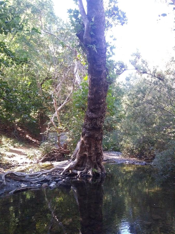 Lone tree. Creek nature water stock images