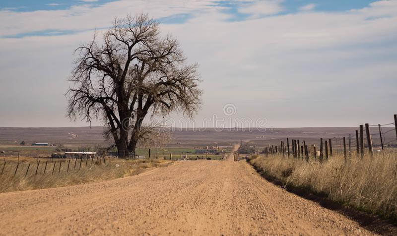 Lone tree by dirt road. Landscape view of a lone tree along a dirt road located in the Eastern Plains of Colorado stock photo