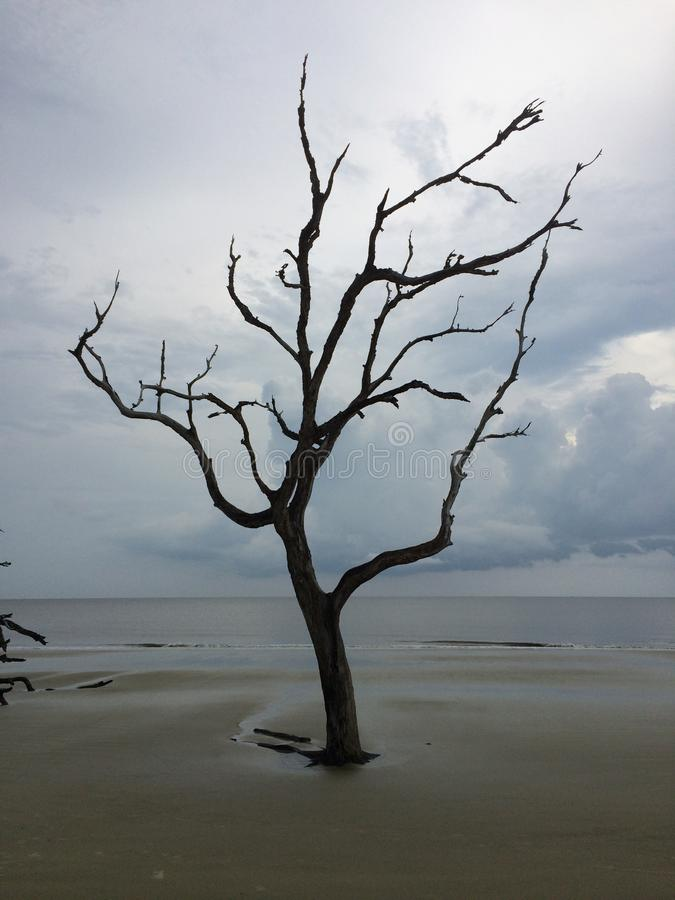 Lone Tree stock photography