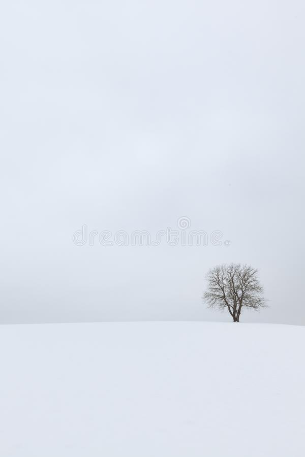 A lone tree in an empty winter landscape with snow - meditation image. Bavaria, Germany royalty free stock photography