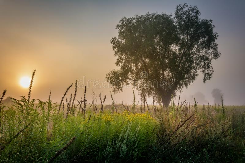 A lone tree enveloped in the morning fog and rays of the sun. stock image