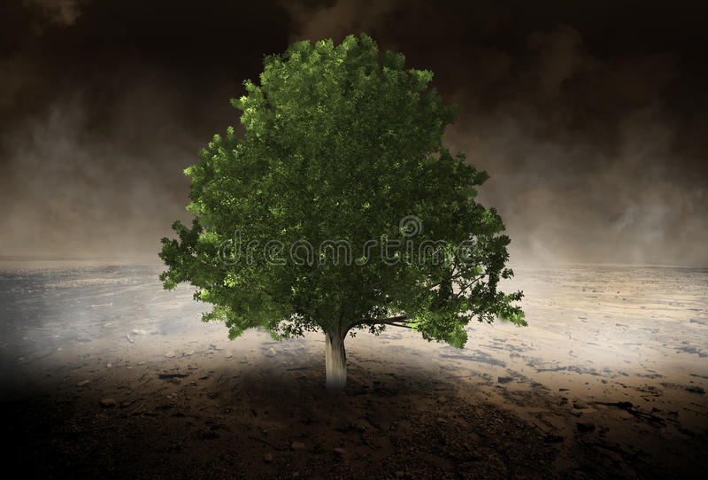 Lone Tree, Environment, Evironmentalist, Desert stock photography