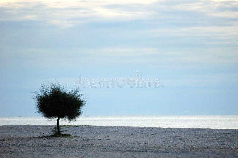 lone tree för strand royaltyfria bilder