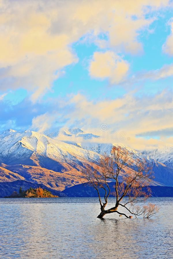 The Lone Tree Famous Lake Wanaka Landmark. The Lone tree, a single tree that grows over the waters of Wanaka Tree is one of the most instagrammable objects on stock images