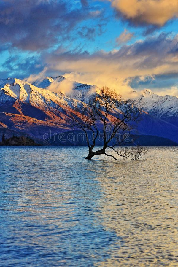 The Lone Tree Famous Lake Wanaka Landmark. The Lone tree, a single tree that grows over the waters of Wanaka Tree is one of the most instagrammable objects on royalty free stock photography