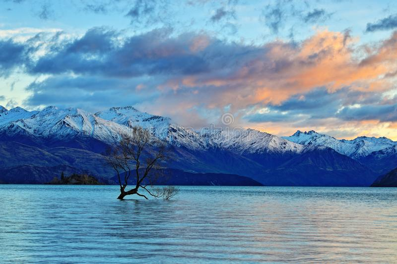 The Lone Tree Famous Lake Wanaka Landmark. The Lone tree, a single tree that grows over the waters of Wanaka Tree is one of the most instagrammable objects on stock photo