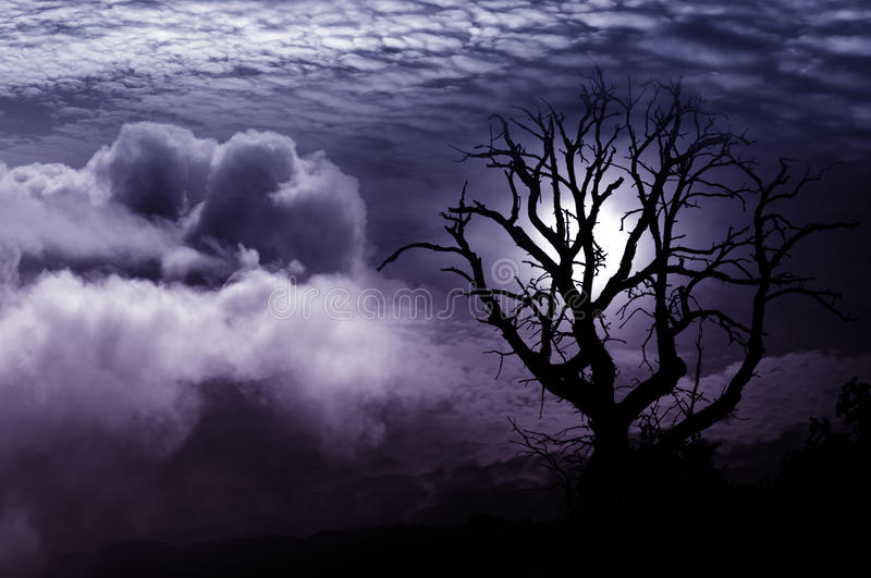 Lone tree fantasy stock images