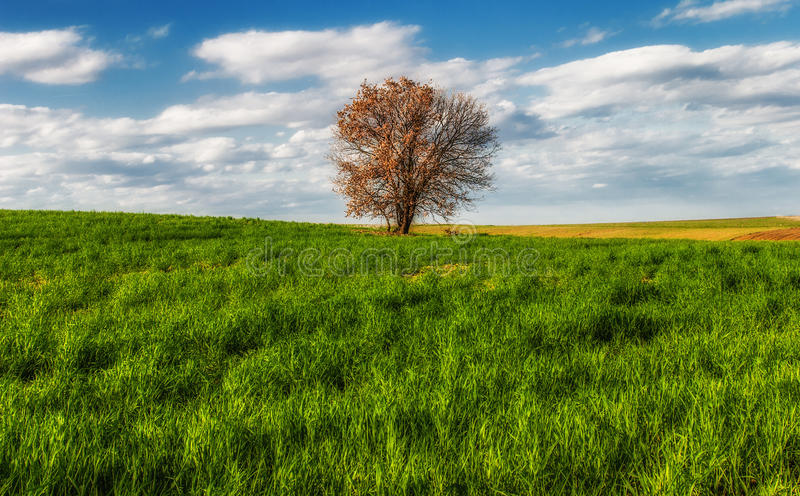 Download Lone tree in the field stock image. Image of season, tree - 26489851